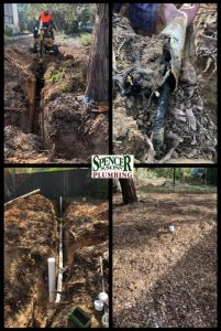 Blocked Drains Tree Root Canberra